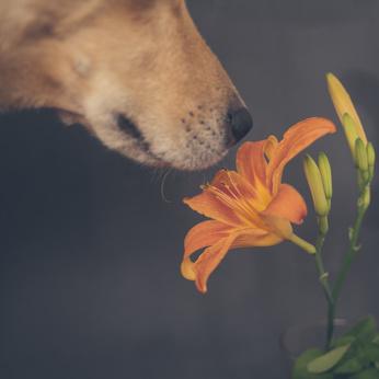 Dog smelling flower